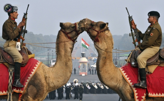 India's Border Security Force (BSF) soldiers ride their camels as they rehearse for the Beating the Retreat ceremony in New Delhi